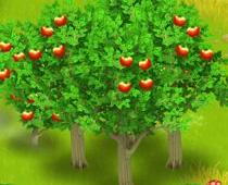 ヘイデイ 果物の木